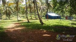 Vendo Finca o terreno en Las Galeras Samana 370 tareas
